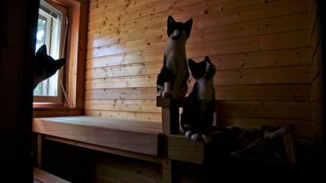 Hannelen talossa toimii sijaiskoti kissoille. Kissoja vilisee myös saunassa.