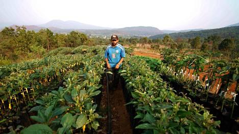 Avokadoviljelijä Uruapantissa Michoacánin osavaltiossa vuonna 2017.