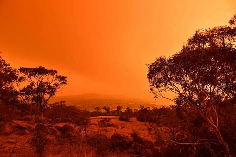 taivas hehkuu punaisena Australiassa. Kymmenet tuhannet ihmiset ovat joutuneet pakenemaan tulipalojen tieltä. Kuva