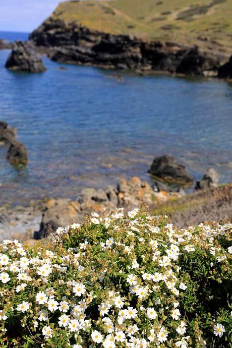 Macarelleta on rannoista maalauksellisin ja Cala en Turquetan sinisin, mutta paikallisille paras ranta on rauhallisin.