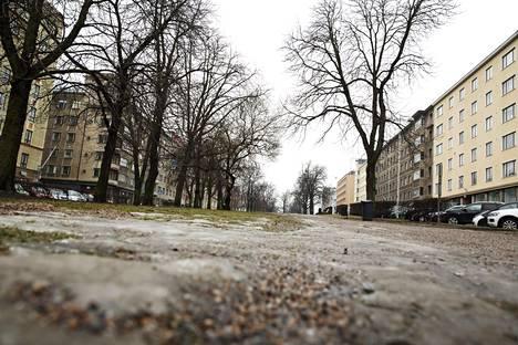 Lumeton hesperian puisto Helsingissä vuonna 2015. Vielä ei voi varmaksi sanoa, näyttääkö joulu tänä vuonna etelässä lumettomalta vai valkealta.