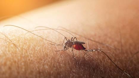 Denguekuume voi lievimmillään olla täysin oireeton, mutta vakavista tapauksista noin viidennes johtaa hoitamattomana kuolemaan.