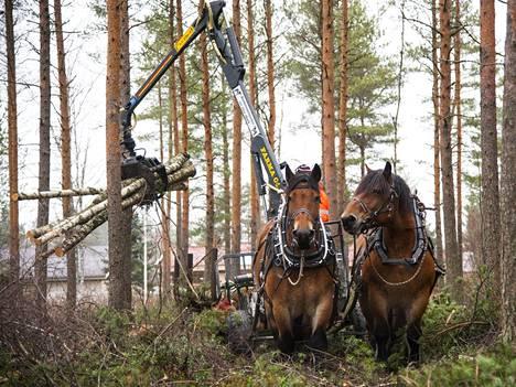 Ruunakaksikko paiski töitä Oulun Huonesuolla syksyllä 2014.