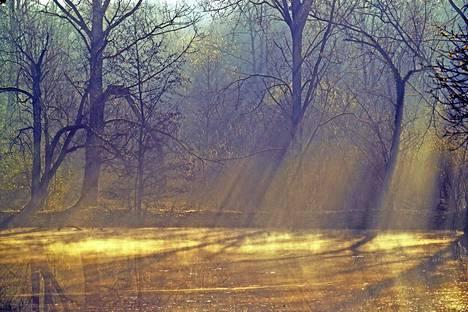 Mike Sheilin Somme-kuvat ovat kuin sadusta, vaikka niiden taustalla on karmea todellisuus.