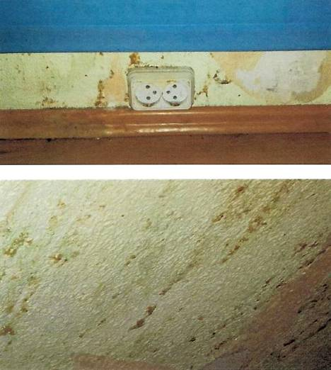 Koiran raapimisen jälkiä seinässä.