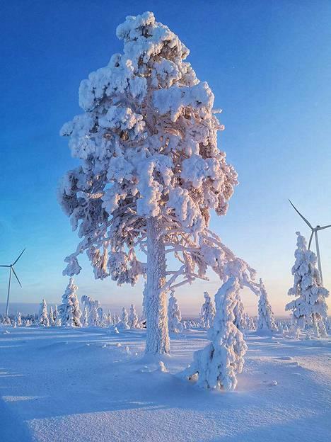 Luminen maisema 25. huhtikuuta Posion Lohirannassa.