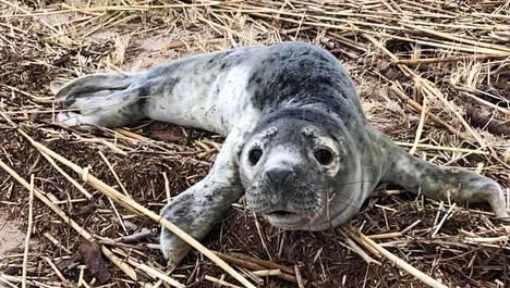Kuutti oli heikossa kunnossa, kun se pelastettiin Turun saaristosta.