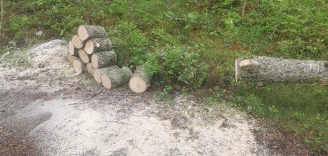Petteri Tyni pätki tielle kaatuneen puun moottorisahalla.