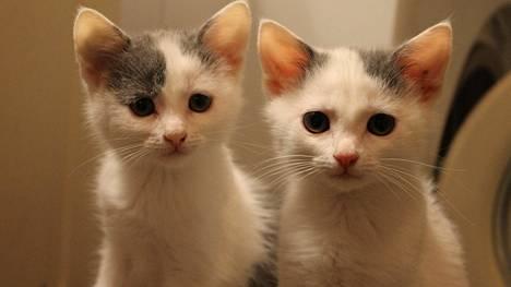 Muistatko autosta heitetyt kissanpennut? Tellervo ja Tuulikki hitsautuivat yhteen ja tekevät ihan kaiken yhdessä