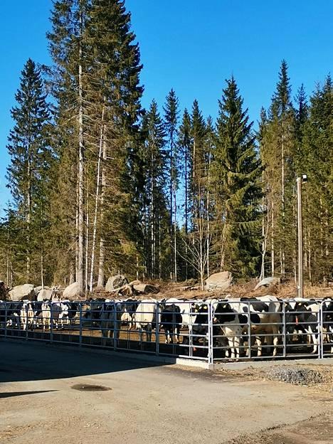 Biokaasutetun lietteen ravinteet liukenevat maahan nopeasti, mikä lisää peltojen tuottamaa satoa. Kun satotaso nousee, vähenee lehmän ruokintaa varten ostettujen rehujen määrä.
