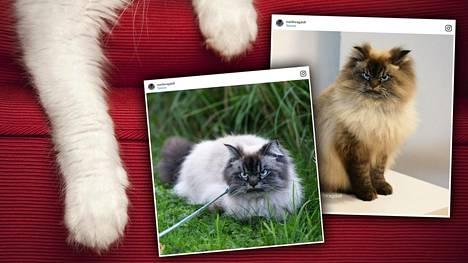 Merlin on perin kiukkuisen näköinen kissa