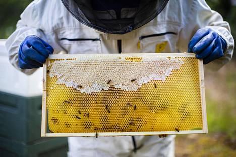 Hunajan koostumus vaihtelee sen mukaan, mistä siitepöly on kerätty.