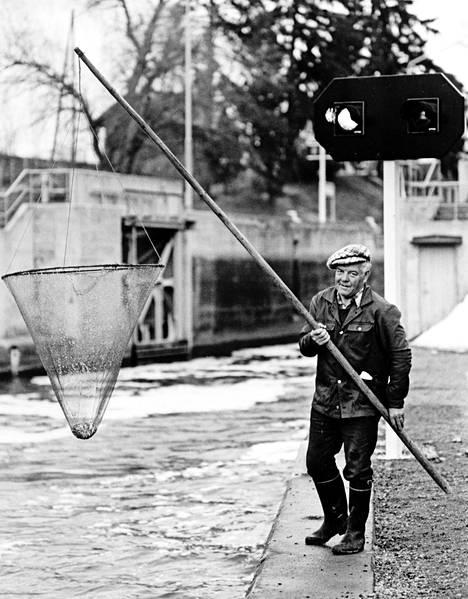 Kuoreen nousun tarkka ajankohta on aina ollut arvoitus, mutta sitä on pyydystetty jo tuhansia vuosia. Lasse Heinonen kalasti Lempäälässä 16. toukokuuta 1981.