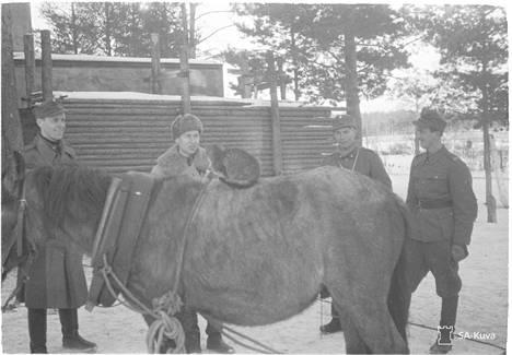 Kissa on kiivennyt hevosen selkään lämmittelemään. Koiviston Saarenpää 1941.11.03