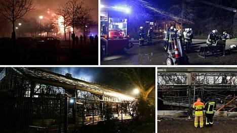 Krefeldin eläintarhan apinatalo tuhoutui rajussa tulipalossa.
