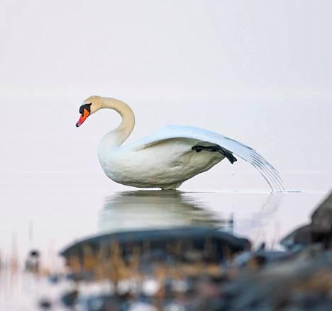 Saaressa on kontaktissa luontoon ja sen eläimiin eri tavalla kuin kaupungissa.