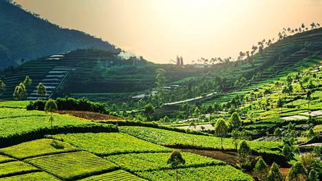 Matkailumedia Condé Nast Travelerin lukijat valitsivat Indonesian maailman parhaaksi matkailumaaksi.