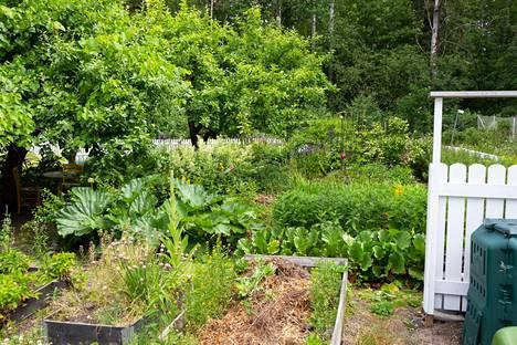 Ennen muodonmuutosta puutarhassa rönsysivät monenlaiset kasvit.