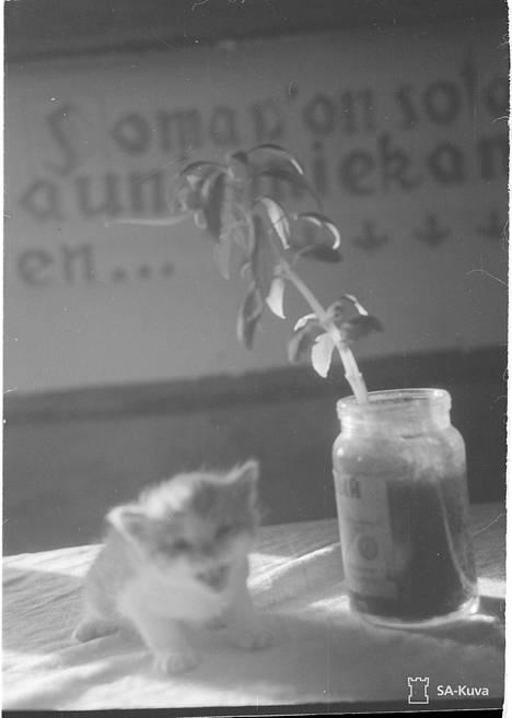 Vuonisten kylän aino kukka ja ainoa kissanpoika, jotka jäivät venäläisten jäljiltä. Vuoninen 1941.11.02