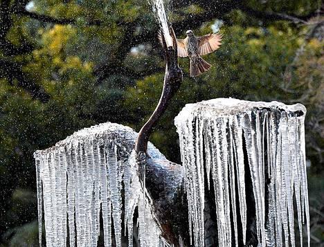 Lintu lentelee osittain jäätyneen vesipatsaan yllä Tokiossa Japanissa.