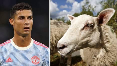 Cristiano Ronaldo sai kokea eläinkunnan voiman.