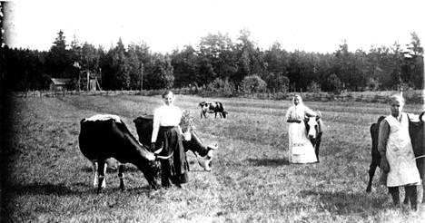 Suomen 1860-luvun nälkävuosien hirvittävät kokemukset suuntasivat maatalouden painopisteen nautakarjatalouteen, joka ei ollut yhtä sääherkkää kun viljanviljely. Karjaa Porvoonradan ja maantien hakamailla 1800-luvun lopulla.