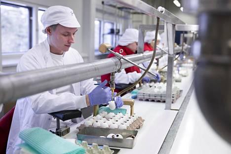 Jonas Donner täyttää kuoria nougatmassalla. Jokainen työntekijä on pukeutunut suojavaatteisiin ja hattuun.