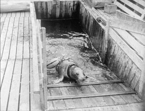 Hylkeiden käyttämissä valjaissa oli mukana merkinantopoiju, joka kiinnittyi sukellusveneeseen ja kohosi pintaan.