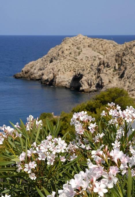 Kallioisella ja tuulisella pohjoisrannikolla kasvillisuus on puutonta ja matalaa.