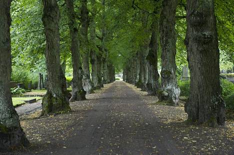 """""""Ikuisuuden"""" tie toi alkuperäisenä sisäänkäyntinä Malmin hautausmaalle. Lehmukset luovat ikuisen hämyn."""