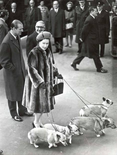 Corgit edustivat kuningattaren rinnalla vuosikymmeniä.
