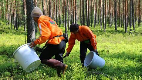 Thaimaalaisia marjanpoimijoita ei Suomessa tänä vuonna nähdä.
