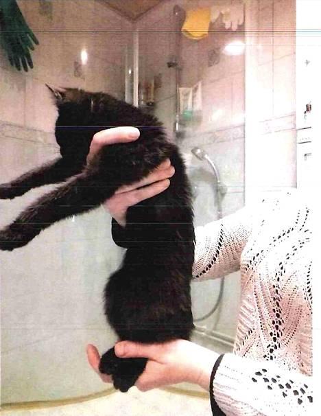 Poliisi löysi naisen asunnon kylpyhuoneesta neljä kissaa, joista kaksi oli pentuja. Kuvassa toinen päiväkausia nälässä olleista pennuista.