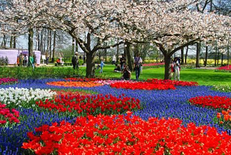 Kevät näyttää jälleen mahtavat voimansa. Upeat tulppaanit kukkivat Keukenhofissa.
