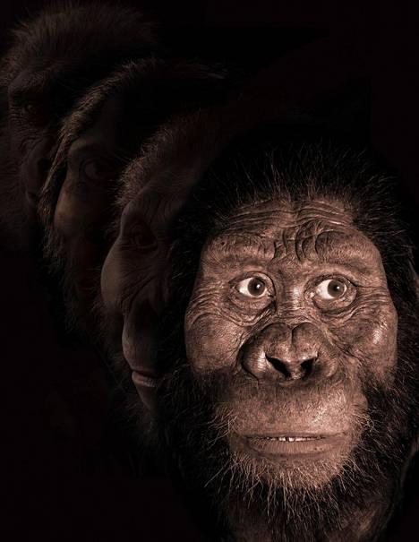Tältä Australopithecus amanensiksen uskotaan näyttäneen.