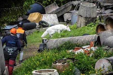 Kun Martta etsii raunioradalla, kaikki kaulapannat ja hihnat poistetaan turvallisuussyistä. Koira ei saa jäädä vaikeisiin paikkoihin kiinni.