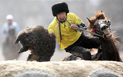 Kirgisialaismies ottaa osaa keskiaasialaiseen Kok-Boru -kilpailuun. Kok-Borussa ratsastaja raahaa vuohenraatoa pitkin kenttää ja yrittää heivata sen vastustajan maaliin.