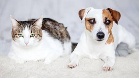 Luonne voi paljastaa, oletko kissa- vai koiraihminen.