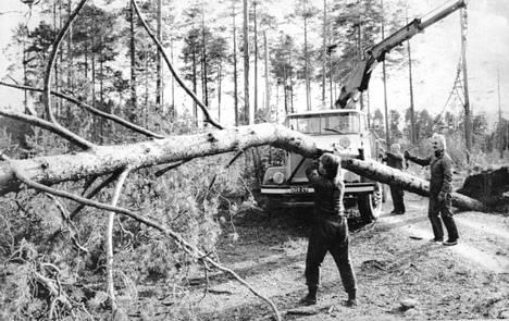 Oulun Mäntylän kaupunginosassa siivottiin myrskyvahinkoja.