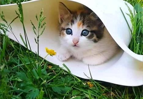 IS:n kissakuvakisan voittaja Bella rakastaa rapsuttelua ja pureskella varpaita