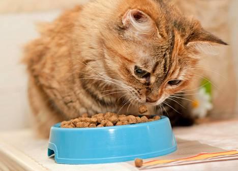 Eräs lukija miettii, aistiiko kissa asioita, joita ihmiset eivät näe.