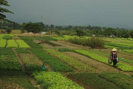Vietnamin suosio on noussut.