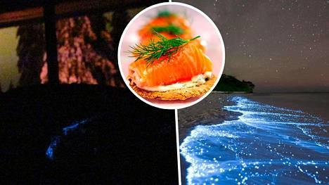 Saara Salmela törmäsi bioluminesenssiin syödessään graavilohta leivän päällä.