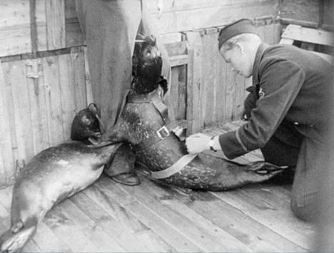 Fellenius aloitti kokeensa harmaahylkeillä ja kirjohylkeillä, mutta päätyi lopulta käyttämään yksinomaan harmaahylkeitä, koska totesi, että niillä oli parempi näkökyky syvissä vesissä.
