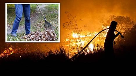 Yhdysvaltain presidentti Donald Trump kehui suomalaista metsänhoitoa ja väitti, että paloja voi ehkäistä haravoinnilla.