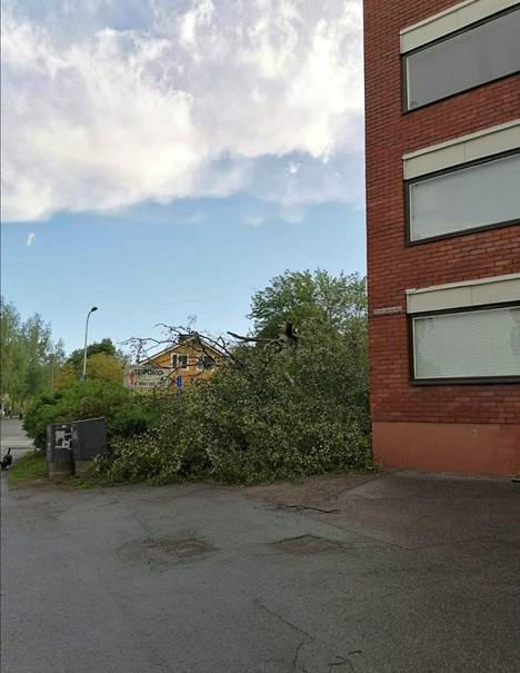 Otus-myrsky kaatoi suuren puun kerrostalon pihalla Tampereella.
