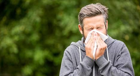 Koivun superkukinta voi aiheuttaa allergiaoireita myös sellaisilla henkilöillä, jotka ovat näiltä aiemmin säästyneet.