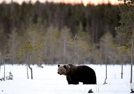Karhujahti kuuluu myös Eetu Kallioisen syksyn ohjelmaan.