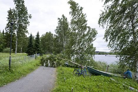 Päivö-myrskyn tuulet kaatoivat puita Joensuussa.