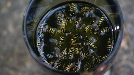 Raivostuttavatko ampiaiset? Lukijamme paljastivat omat kikkansa niiden karkoittamiseen.